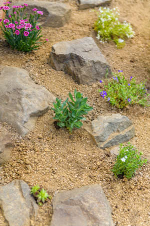 Newly planted rockery garden. Rock garden background with sedum, dianthus, phlox and succulent rossete flowers.
