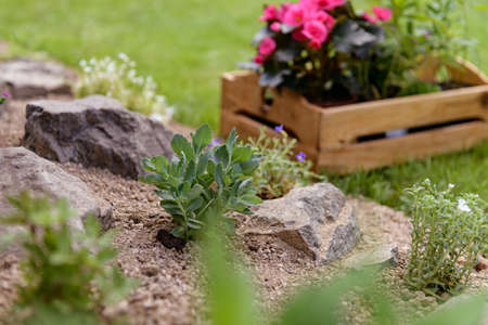 Wooden crate full of beautiful plants ready to be planted in a rock garden. DIY, gardening relax concept background.