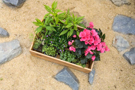 Wooden crate full of beautiful plants ready to be planted in a rock garden. DIY, gardening relax concept background. Top view.