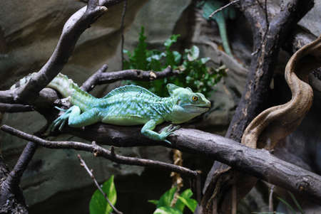 exotically: chameleon