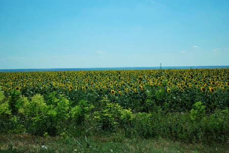 Ukraine - Landscape photo