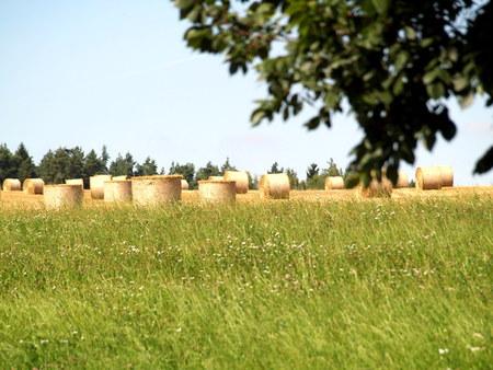 Strobalen op veld