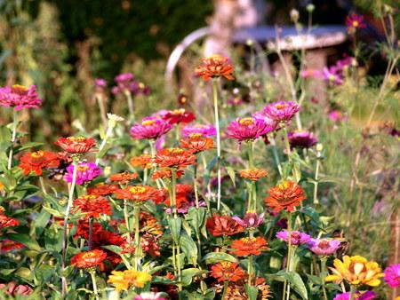 pflanze: Sommerblumen Stock Photo