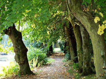 Wanderweg Stock Photo - 65227100
