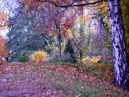 natue: Trees in Hebst Stock Photo