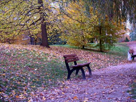 herbst: Parkbank im Herbst