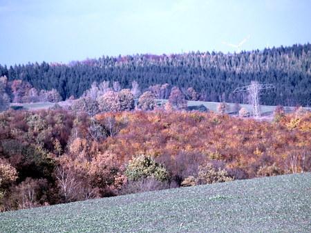 herbst: Laubwald im Herbst