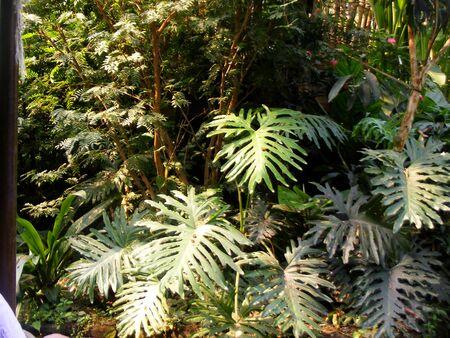 pflanzen: Tropenpflanzen