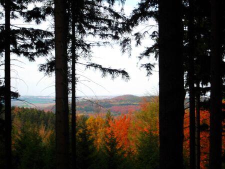 herbst: Wald im Herbst