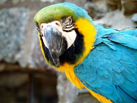 Macaw, parrot, bird, feathers, blue, yellow, wing,