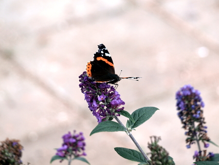 Butterfly on the flower.