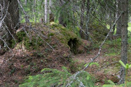 animal den: An abandoned den of a bear deep in the woods