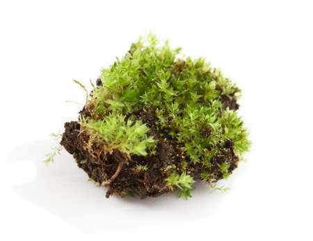 Close up of a small part of moss isolated against a white background