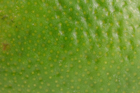 Close-up of a lime showing its texture