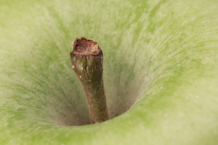 Close-up of the stem of a green apple