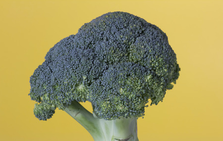 The vegetable broccoli against a yellow background