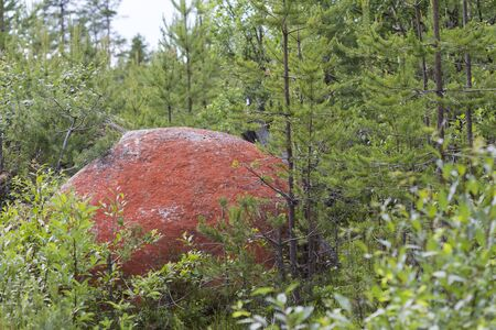 Rock in northern Sweden with red color because of the algae Trentepohlia iolitus