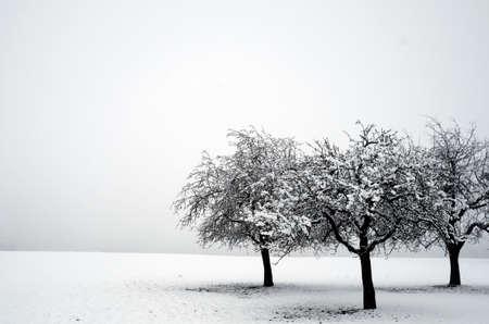 Three trees in snow. Reklamní fotografie