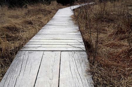 moor: Footbridge into the Moor Stock Photo