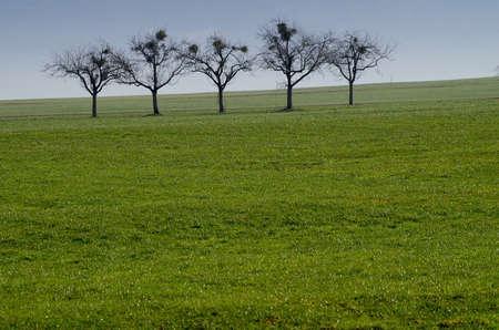 arboles frutales: Árboles frutales en invierno.