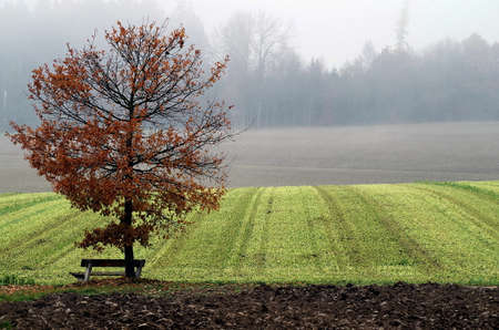 Park bench under fall tree at on a field in Bavaria.