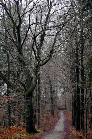 Path under bare trees.