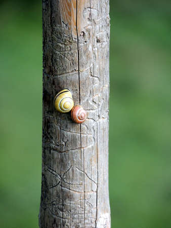 Closeup of two snails on a fence post.