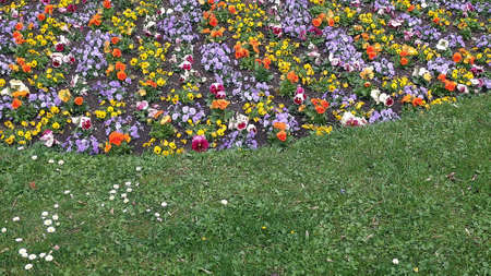 Lawn and flowers.