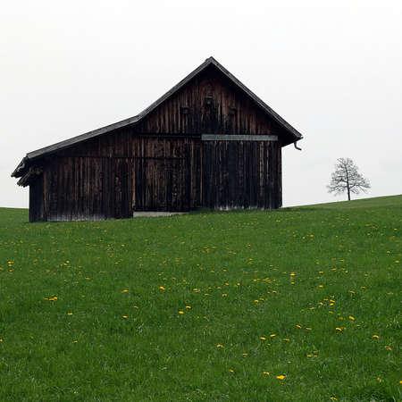 Wooden Barn on green meadow.