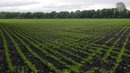 Fertile farmland. Reklamní fotografie