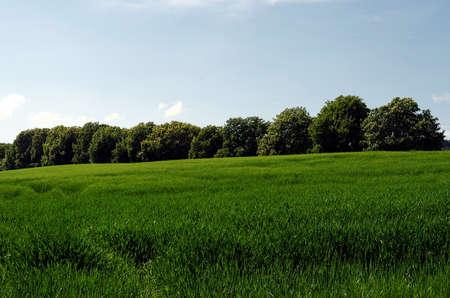 Fertile green farmland.
