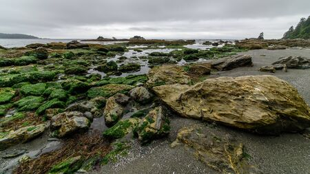 Low tide in a bay of the Pacific Rim National Park, Vancouver Island, North-America, Canada, British Colombia 写真素材