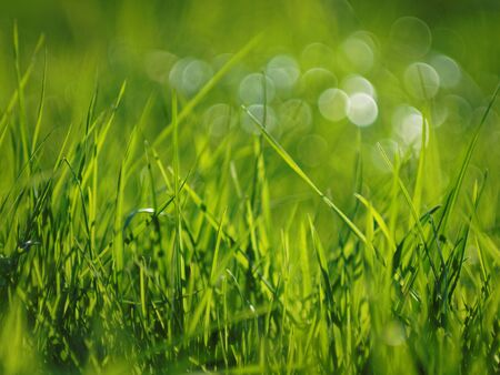 artisitc: grass and bokeh bubbles on a sunny day Stock Photo