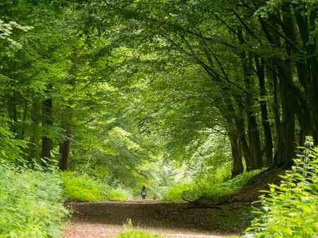 walking the dog through the beechwood forest in springtime