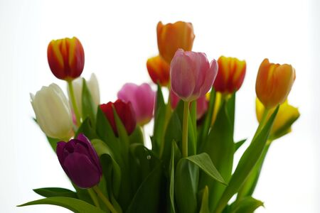 a colorful tulip bouquet against white background Zdjęcie Seryjne