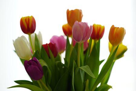 Un colorido ramo de tulipanes contra el fondo blanco. Foto de archivo
