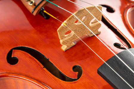 A close up of the body of a violin