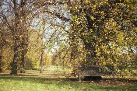 Hyde Park in Autumn London - UK Stock Photo