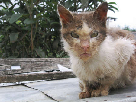 calico whiskers: Stray cat