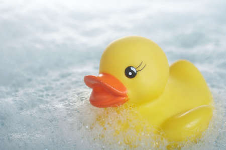 squeaky clean: Yellow rubber duck floating in suds in bathtub