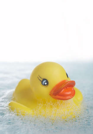 squeaky clean: Yellow rubber duck floating in bathtub with copyspace