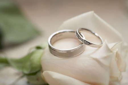 Closeup of silver wedding rings on white rose DOF focus on diamonds Standard-Bild