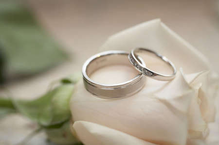 Closeup of silver wedding rings on white rose DOF focus on diamonds Stock Photo