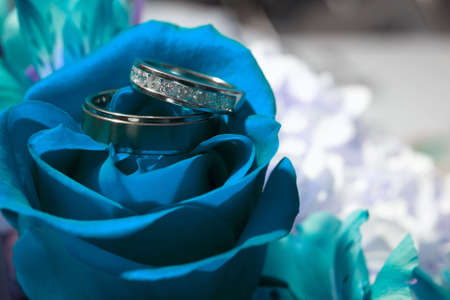 ring wedding: Closeup of wedding rings on blue rose DOF focus on diamonds