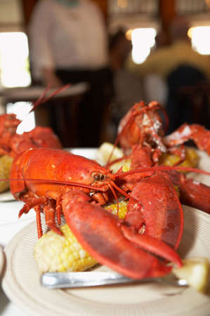 lobster dinner: Fresh lobster dinner with corn on the cob Stock Photo