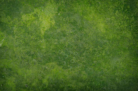 green background: Old green rust grunge abstract background texture Stock Photo