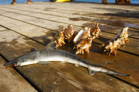 Shark and sea creatures laying on a pier Stok Fotoğraf