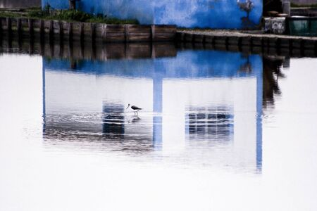 Water reflection of house and bird