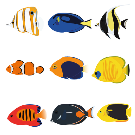 tang: Tropical fishes set containing nine fishes: Copperband Angelfish, Blue Tang, Moonrish Idol, Clownfish, Flameback Angelfish, Masked Angelfish, Flame Angelfish, Achilles Tang, Rock Beauty Angelfish.