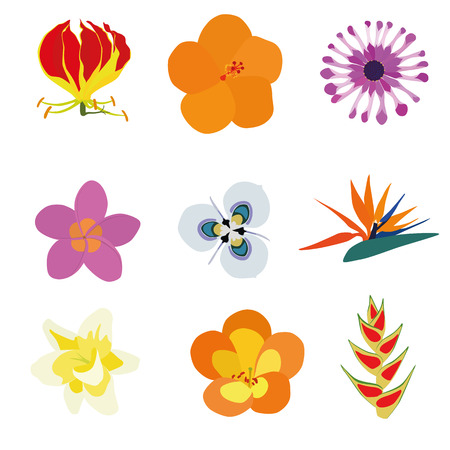 osteospermum: Set of nine exotic flowers containing: Flame Lily, Orange Hibiscus, African Daisy, Plumeria, Moraea villosa, Bird of Paradise, Vanilla, Tropical Rhododendron, Heliconia Wagneriana.